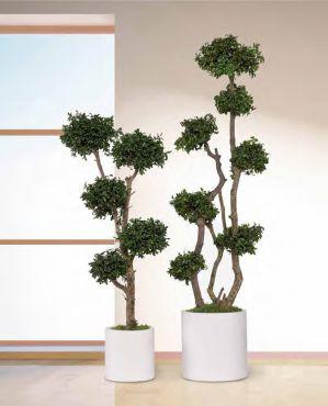 Jumbo coculus arbre feuillus naturel stabilis s sans for Arbre sans entretien