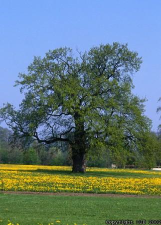 arbres et plantes naturelles artificielles stabilisees