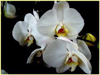 Orchidees Une Fleur Naturelle Stabilisee Decorative Sans Entretien