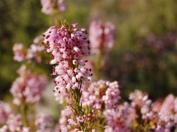 Bruy re plante naturelle stabilis e sans entretien sans eau sans terre s - Plante sans lumiere naturelle ...