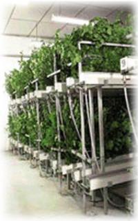 stabilisation plantes naturelles stabilis es plantes sans entretien sans eau sans terre. Black Bedroom Furniture Sets. Home Design Ideas