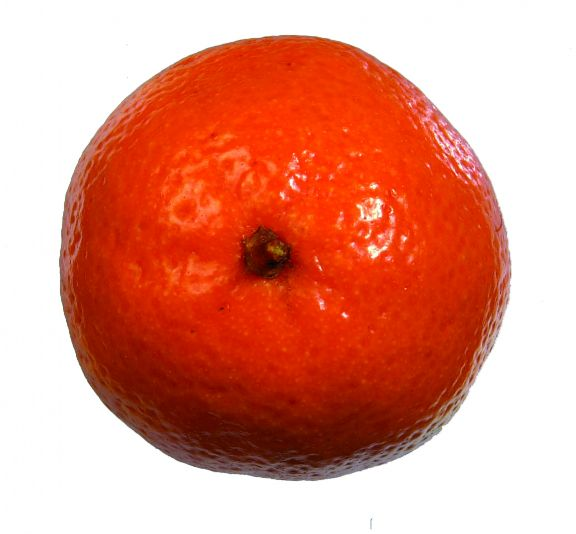 Mandarine, une plante naturelle stabilisée décorative
