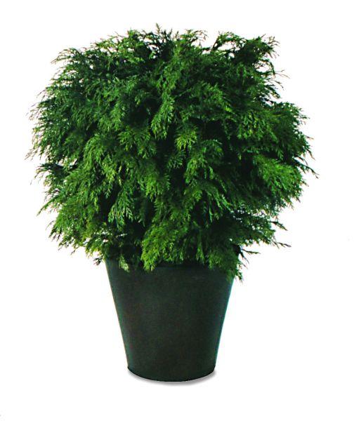 Gobulosa, une plante naturelle stabilisée décorative, sans