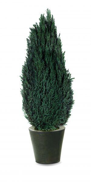 Elwoody un arbre naturel stabilis sans entretien sans for Arbre sans entretien