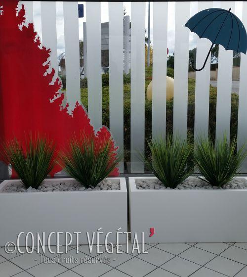 Tiki grande plante naturelle stabilis e sans entretien for Plantes artificielles lyon