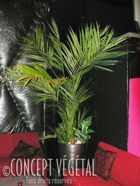 arbres tropicaux artificiels plante stabilis e ou artificielle murs v g taux sur mesure. Black Bedroom Furniture Sets. Home Design Ideas