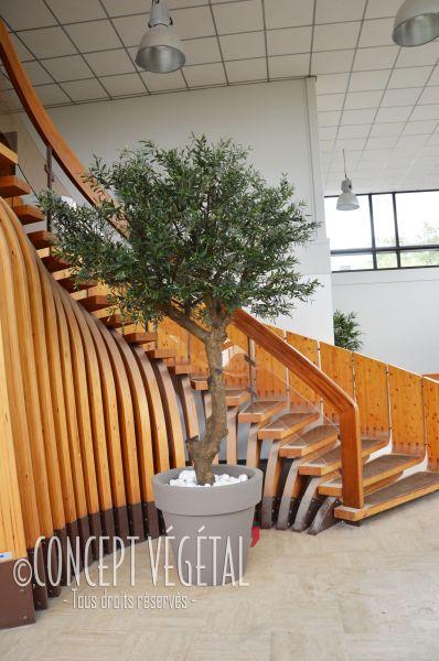 jumbo sala arbre feuillus naturel stabilis s sans entretien sans terre ni lumi re en. Black Bedroom Furniture Sets. Home Design Ideas