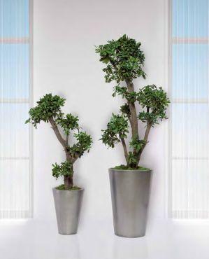 jumbo coculus arbre feuillus naturel stabilis s sans entretien ni lumi re en d coration. Black Bedroom Furniture Sets. Home Design Ideas