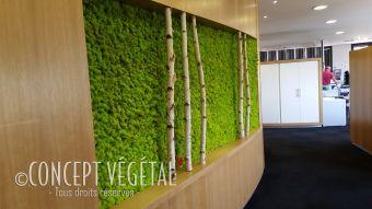 mur en mousse plante stabilis e ou artificielle murs v g taux sur mesure. Black Bedroom Furniture Sets. Home Design Ideas