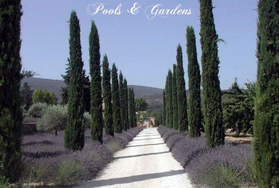 Cypr s un arbre naturel stabilis sans entretien sans for Arbre sans entretien